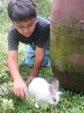 Anak bermain dengan kelinci di taman