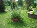 Bunga-dalam-pot tanah liat