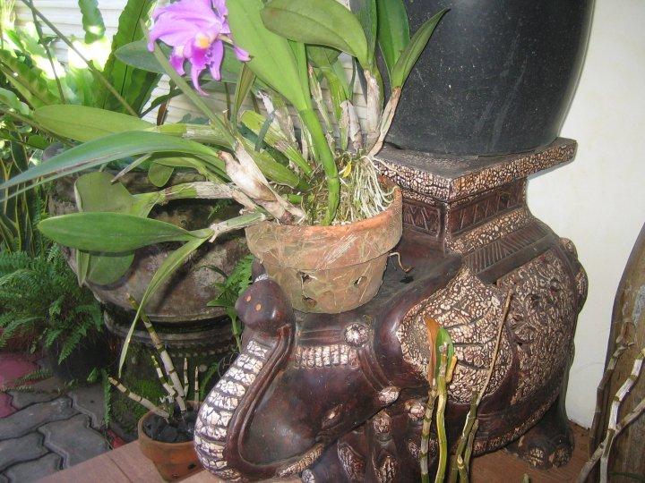 Pot tanah liat menyatukan alam dalam kehidupan kita for Passion jewelry taman anggrek