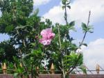 Andani-Purple Ruffle Hibiscus