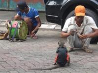 Crew Topeng Monyet