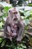 Ibu & Anak Monyet