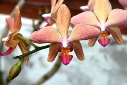 Anggrek anggrek cantik dan elegant dari bangli for Passion jewelry taman anggrek