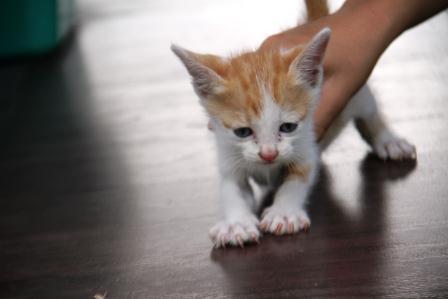 Cats Kucing Nimadesriandani