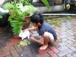 Andani - Kelinci
