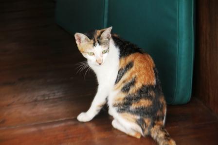Toxoplasma, Kucing Dan Wanita Hamil. (1/5)