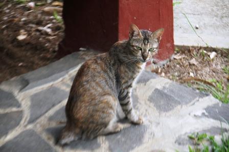 Toxoplasma, Kucing Dan Wanita Hamil. (3/5)
