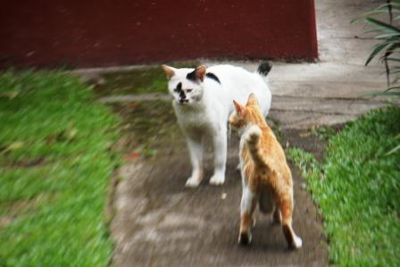 Toxoplasma, Kucing Dan Wanita Hamil. (5/5)