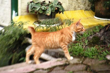 Toxoplasma, Kucing Dan Wanita Hamil. (4/5)