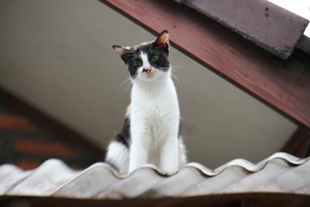 Everybody Wants To Be A Cat Nimadesriandani