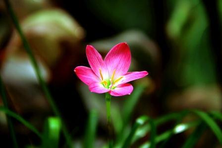 Andani -Lily Hujan Pink1