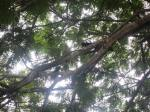 Andani- Burung gagak