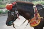 Andani - Kuda 1