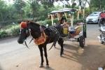Andani - Kuda 10