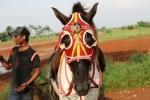 Andani - Kuda 11