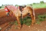 Andani - Kuda 12