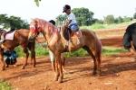 Andani - Kuda 3