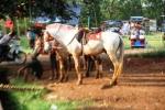 Andani - Kuda 4