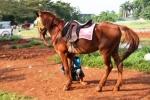 Andani - Kuda 5