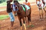 Andani - Kuda 6