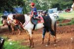 Andani - Kuda 7