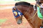 Andani - Kuda 8