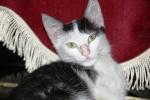 Kucing bernama Persia1