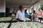 Silk Cocoon Market, Ramanagara1