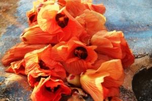 Bunga Waru Laut
