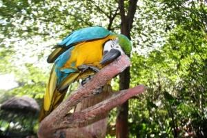 Macaw Bird1