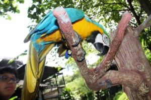 Macaw Bird3