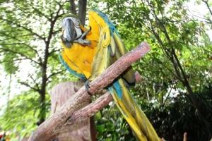 Macaw Bird4