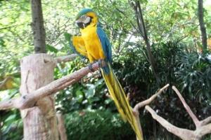 Macaw Bird6