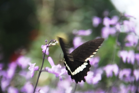 Andani-Papilio demolion 2