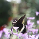 Andani-Papilio demolion