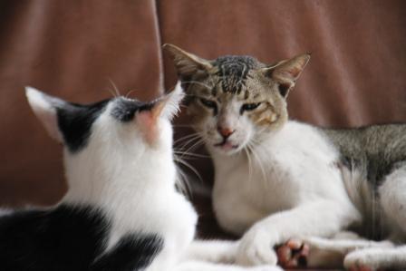Cats Nimadesriandani