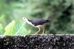 Burung Terkwak 2