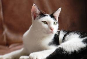 Andani - Kucingku Persia 1