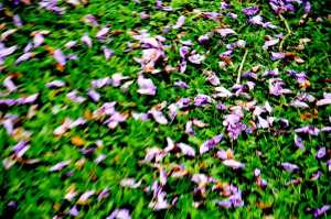 Bunga-bunga berguguran1