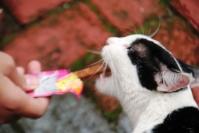 Persia Dan Snack Kucing