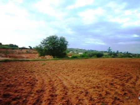 Tanah ladang yang berwarna merah sehabis di olah dan siap untuk ditanami kembali.