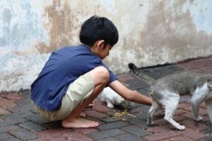 Memberi makan kucing
