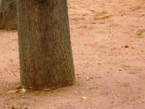 Pohon Di Halaman Yang Bersih