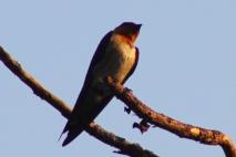 Burung Layang-Layang 2