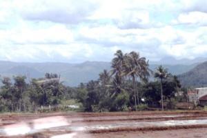 Pemandangan Sawah ke Gunung Padang