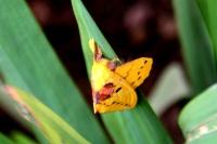Ngengat Kuning 5