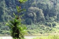 Pohon Palem di tepi danau / Situ Gunung