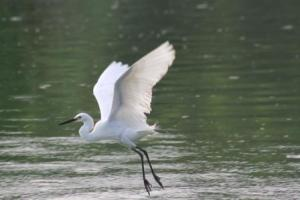 Burung-Burung Air di Lagoon 2
