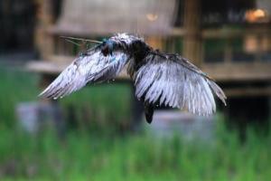Burung-burungan