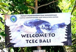 Turtle Conservation & Education Center, Pulau Serangan,  Bali